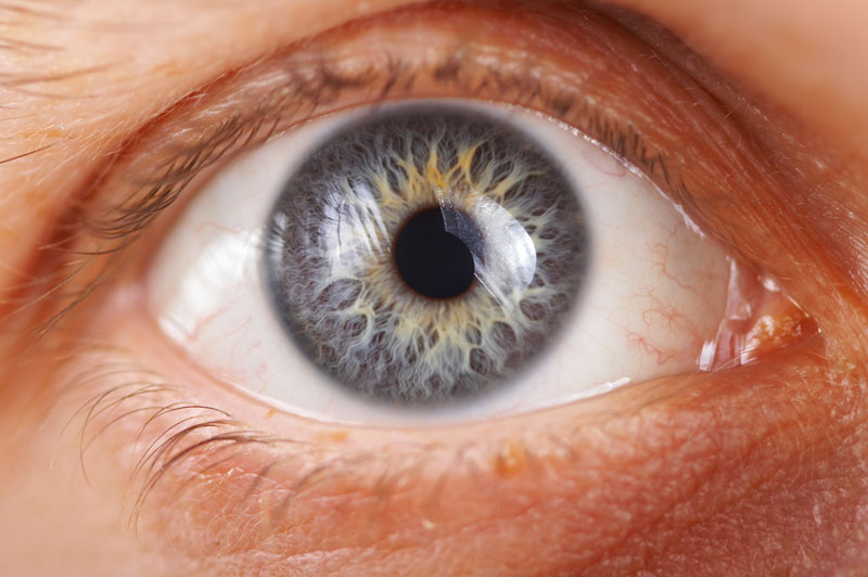 Indicate Vision Checkup From Optometrist